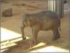 29.1.2006 Elefantenhaus
