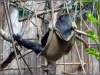 21.4.2007 Auch im Affenhaus ist rumhängen angesagt