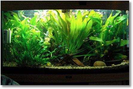 aquarium 2009 05 04